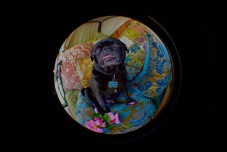 Henry Puggins Welcomes the World To The Pug and The Parrot. Travel Well.