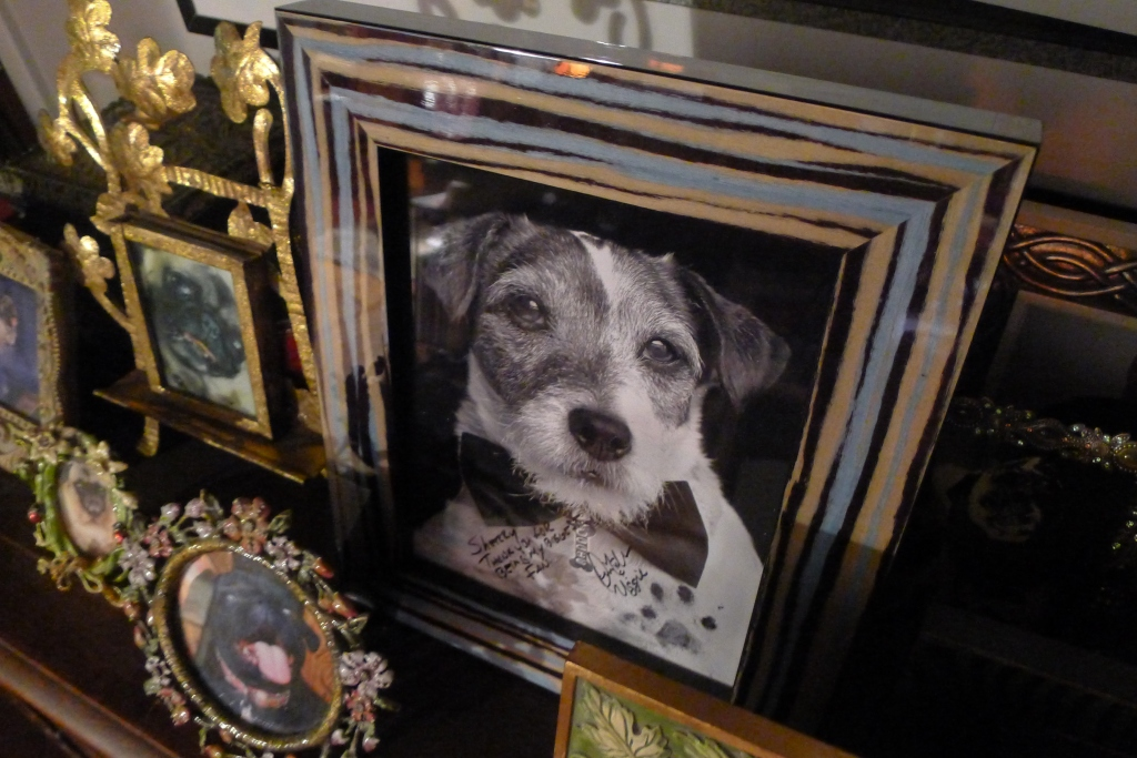 Uggie holds a place of honor among other portraits of our canine family members
