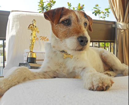 Hollywood star Uggie relaxes in luxury at a poolside cabana